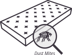 Dust Mites Cleaning Treatment